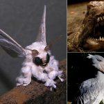 These 15 Scariest Animals Are Considered Freaks of Nature