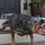 10 Scariest Dog Breeds You Will Surely Run Away From